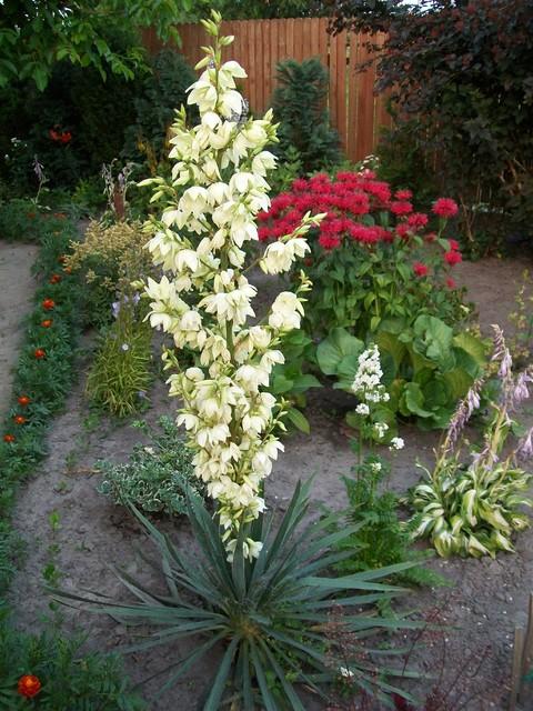 tymczasem w ogródku... susza