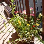 Balkonowa łąka