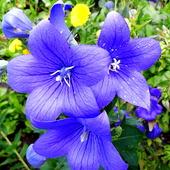 Błękitów Wam życzę:)