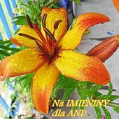 Dla naszych sympatycznych koleżanek o imieniu ANIA!