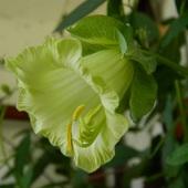 Pierwszy kwiatek :)