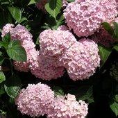 Różowe kule