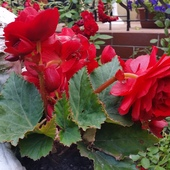 w towarzystwie kwiatów przyjemniej