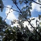 Wiosenny widoczek