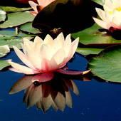 Wodny Kwiatek