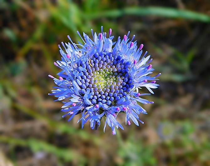 niebieska gwiazdka ............