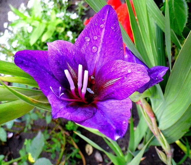 Roślinki zachwycone deszczykiem:)