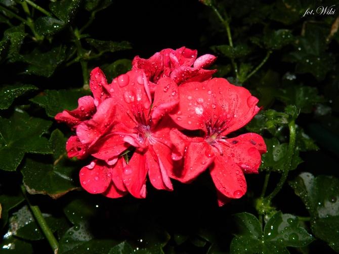 U mnie też pada............