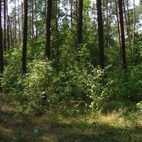 Las i zieleń