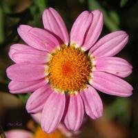 Życzę różowych snów