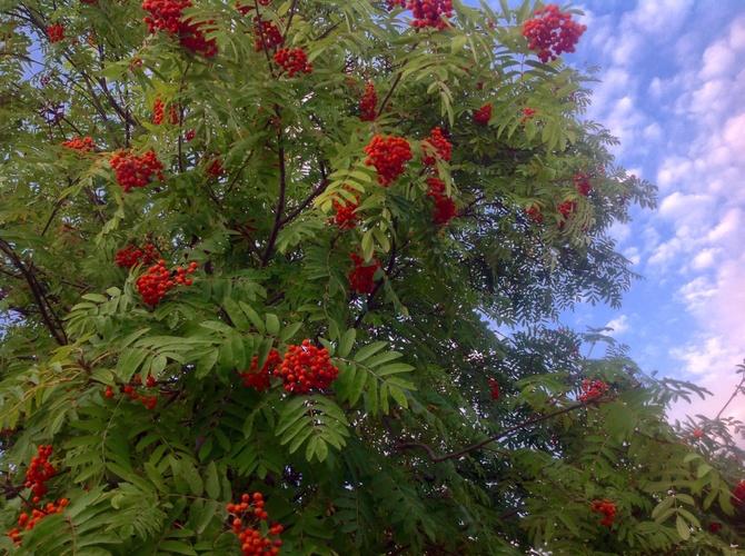 Czerwone korale......