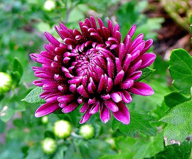 Piękne jesienne kolory