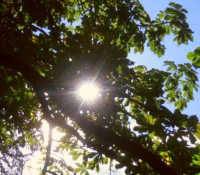 Słońce późnego lata