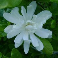 biały kwiat..