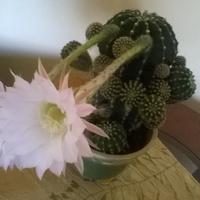 co za oczy ma ten kaktus?