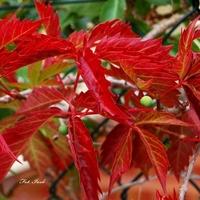 Kolorowa jesień.