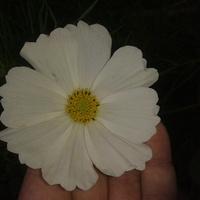 mój biały
