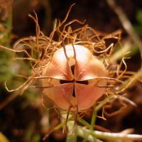 Szkatułka z nasionami