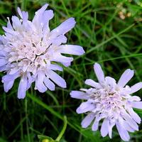 Wolne kwiatki :)