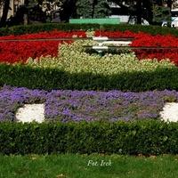 Zegar kwiatowy w moim mieście.