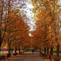 Alejka w parku