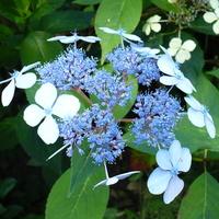 Biało - Niebiesko