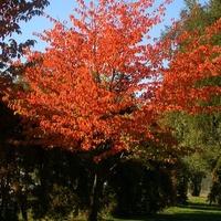 Jesienne drzewko w parku