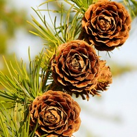 jesienne róże .........