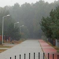 Mgła jesienna pod lasem