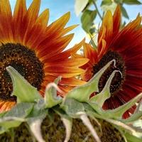 Słonecznych pozdrowień cd :)