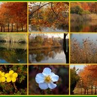 W Jesiennym Parku