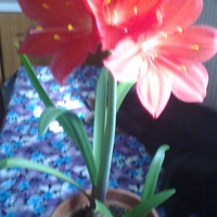 Zeszłoroczne kwitnienie