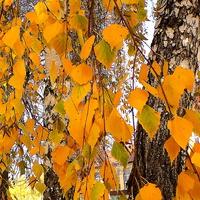 Złota jesień na mojej ulicy