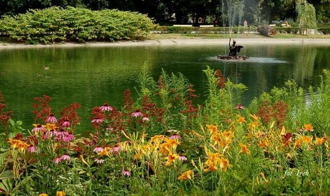 Kwiaty nad wodą w parku