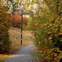 Alejka spacerowa w parku