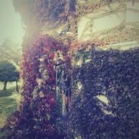 Jesień w Winnogórze
