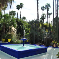 Kaktusiarkom