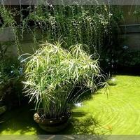 Rośliny Nad Wodą