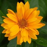 Słoneczny kwiatek
