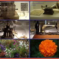Starocie i kwiaty
