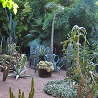 Wracam do kaktusów