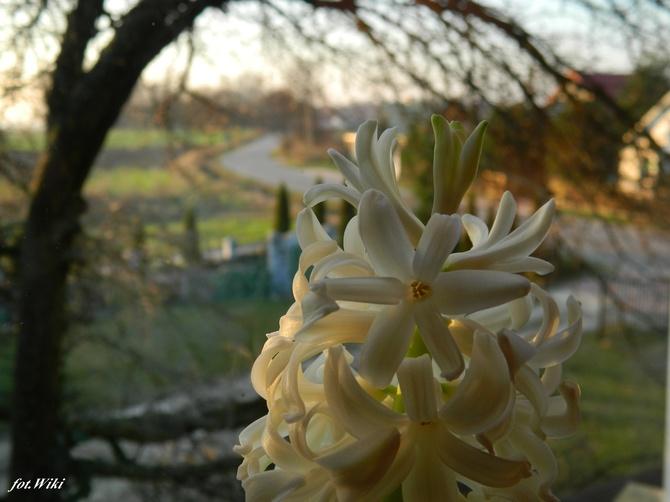 Grudniowa wiosna:)