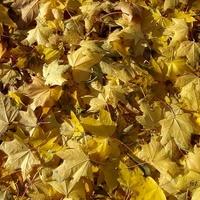 Jesienny materac