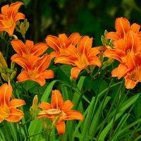 jeszcze oranż ................