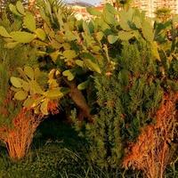 Kaktusy na wolności