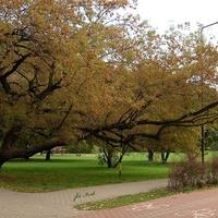 Krzywe drzewo jesienne