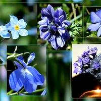 Niebiesko:)