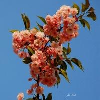 Niebo i Kwiaty