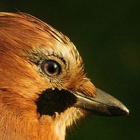 portret ptaka ................