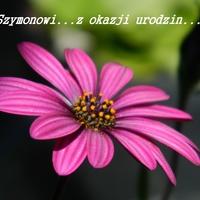 SZYMONOWI......